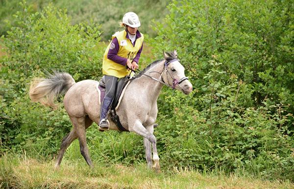 cheval d'endurance avec un nose-net